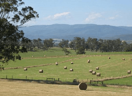 Drouin farms and wineries