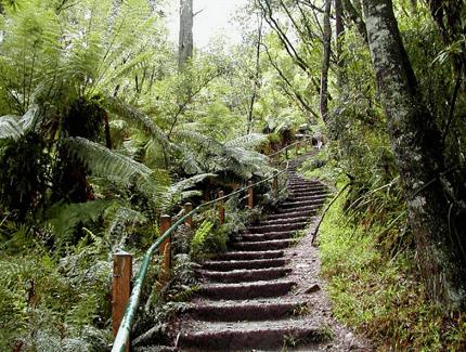 Tourist spots of Ferntree Gully